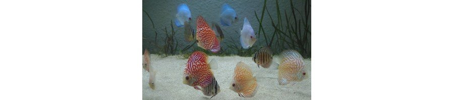 Peces e Invertebrados